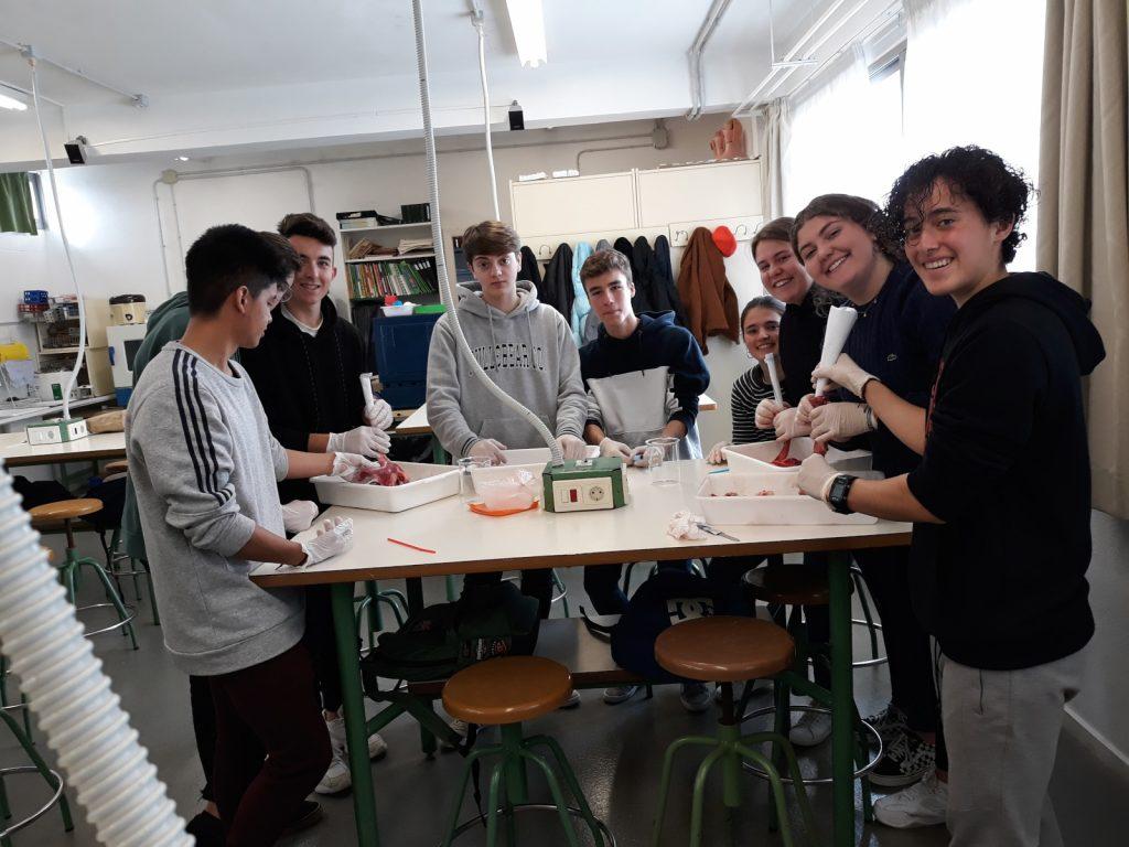 Laboratori biologia (3)